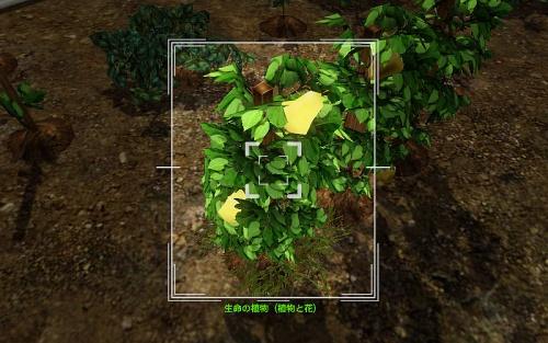 camera_Life Plant