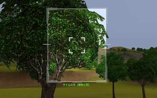 camera_Lime Tree