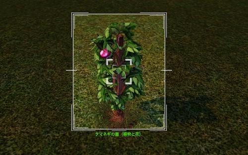 camera_Onion Plant