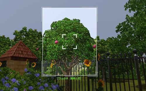 camera_Plum tree