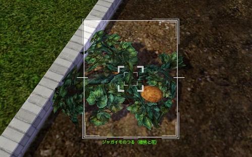camera_Potato Plant