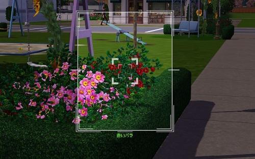 camera_Red Rose