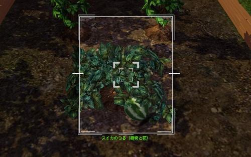 camera_Watermelon Plant