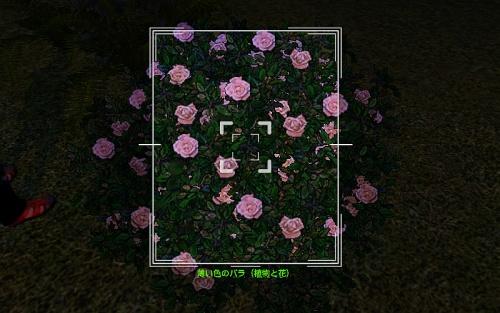 camera_White Rose