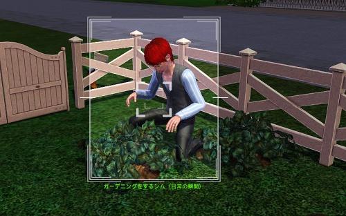 camera-A Sim Gardening