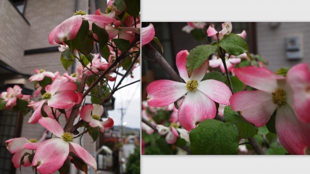 2012-04-212_convert_20120422221105.jpg