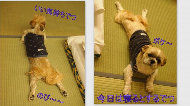 2012-05-015_convert_20120603234515.jpg