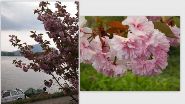 2012-05-139_convert_20120529014719.jpg