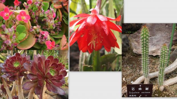 2012-05-148_convert_20120603231459.jpg