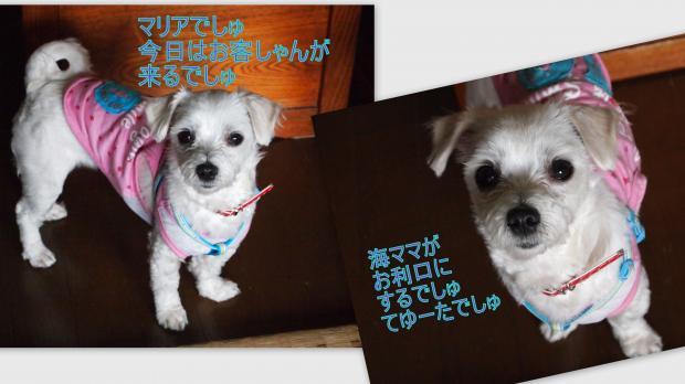 2012-06-032_convert_20120606005104.jpg