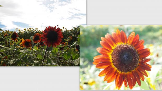 2012-08-021_convert_20120822020640.jpg