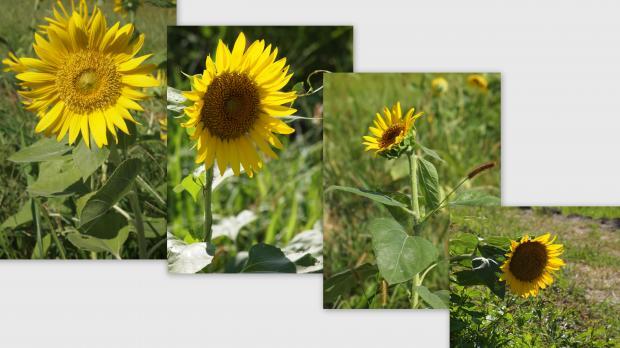 2012-08-022_convert_20120823021358.jpg