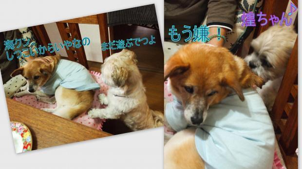 2012-08-094_convert_20120810004948.jpg