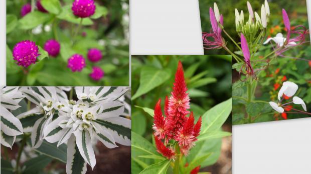 2012-08-13_convert_20120814011743.jpg