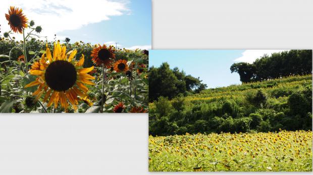 2012-08-206_convert_20120822020526.jpg