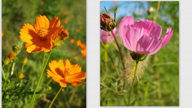 2012-08-206_convert_20120823211525.jpg