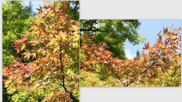 2012-09-212_convert_20121008204021.jpg
