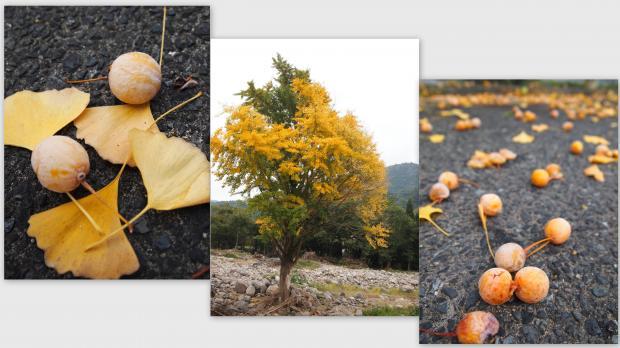 2012-10-144_convert_20121108024049.jpg