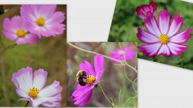 2012-10-251_convert_20121104224648.jpg