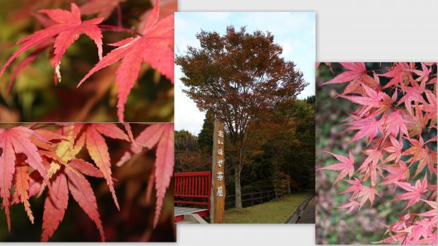 2012-10-254_convert_20121104225045.jpg