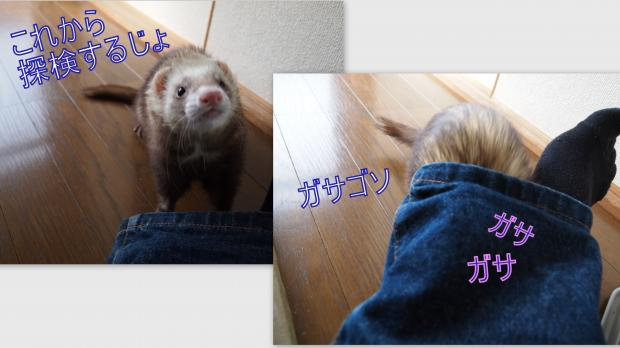 2012-11-21_convert_20121123150823.jpg