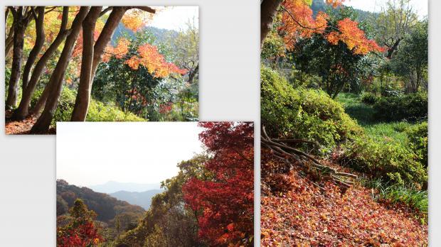 2012-11-252_convert_20121207215927.jpg