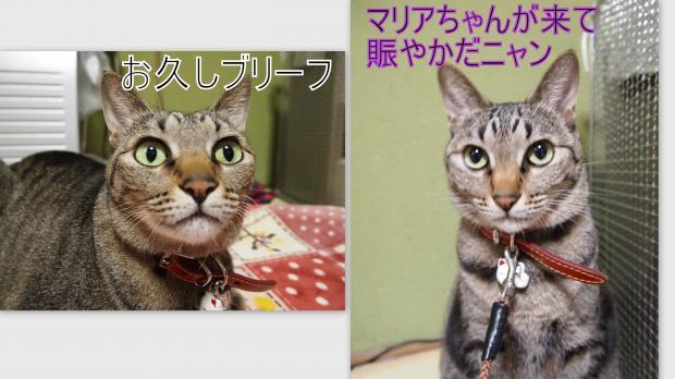 2012-12-053_convert_20121210012619.jpg