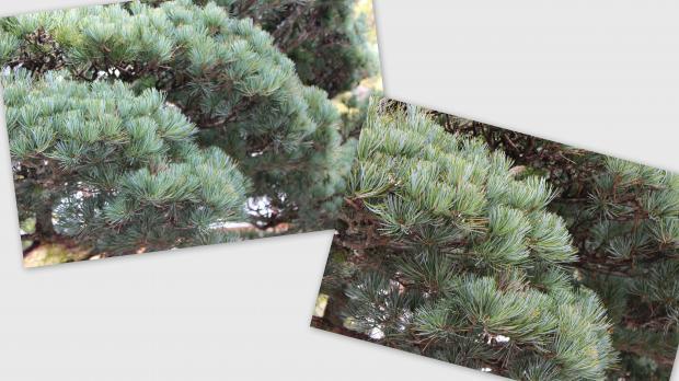 2012-12-1715_convert_20121227023831.jpg