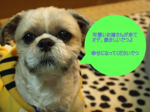 ・搾シ単3040975-1_convert_20120502005058