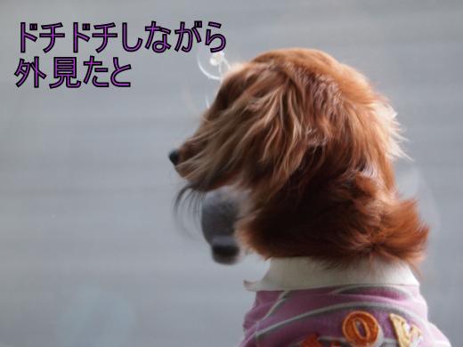 ・搾シ善4281994_convert_20120503015831
