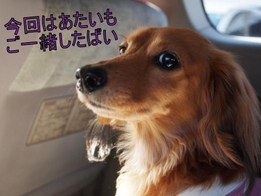 ・搾シ単4281993_convert_20120503015919