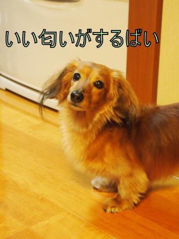 ・搾シ撤5052242_convert_20120507015824