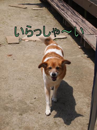 ・搾シ撤5062268_convert_20120508234423
