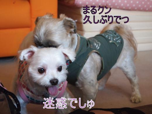 ・搾シ撤5132530_convert_20120521024857