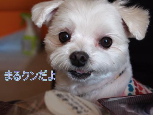 ・搾シ撤5132532_convert_20120521024914