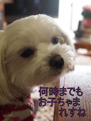 ・搾シ撤5193141_convert_20120524220239