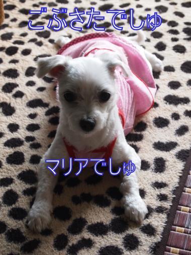 ・搾シ善5263235_convert_20120527231544