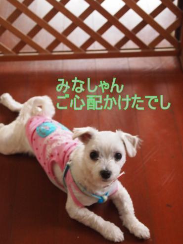 ・搾シ撤5313318_convert_20120531233227