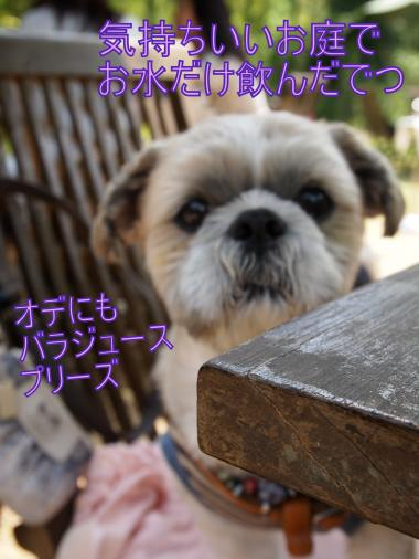 ・搾シ善5142709_convert_20120601001941