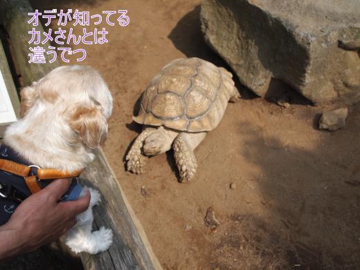 ・搾シ単5142753_convert_20120603232928