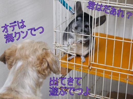 ・搾シ撤5142825_convert_20120603233024