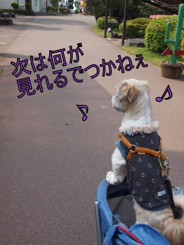 ・搾シ善5142761_convert_20120603232858