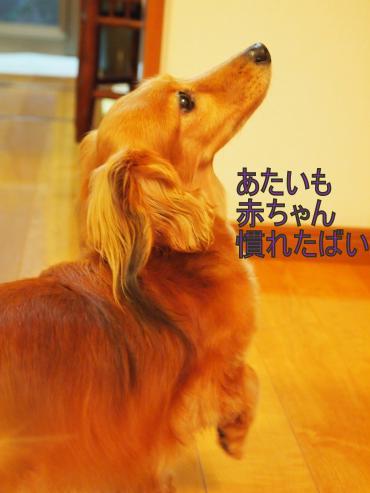 ・撰シ善6043453_convert_20120606212636