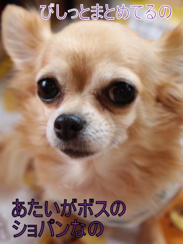 ・搾シ善6043417_convert_20120606224108