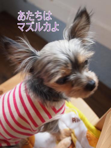 ・搾シ捻6043421_convert_20120606224342