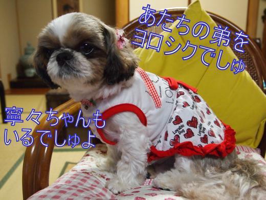 ・搾シ単B097670_convert_20120615231447