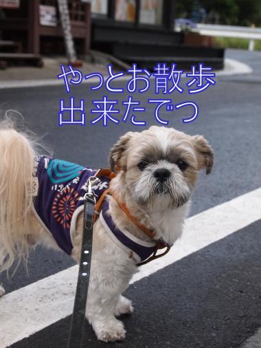 ・搾シ単6053489_convert_20120625031059