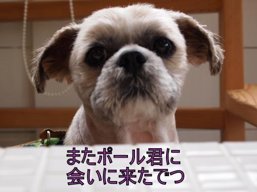 ・搾シ撤6153553_convert_20120625031615