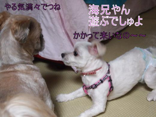 ・搾シ善6273846_convert_20120701000750