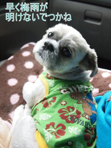 ・搾シ儕6213794_convert_20120701011722